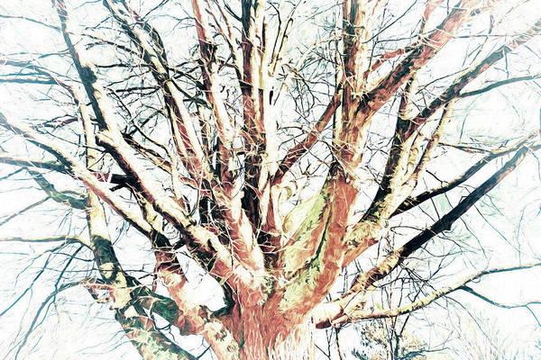 Wall Art - Photograph - Naked Tree by Dan Carmichael