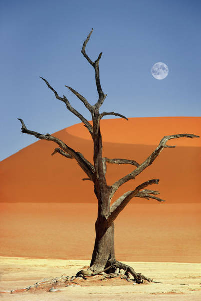 Wall Art - Photograph - Namibia, Sossusvlei, Deadvlei by Dietmar Temps, Cologne