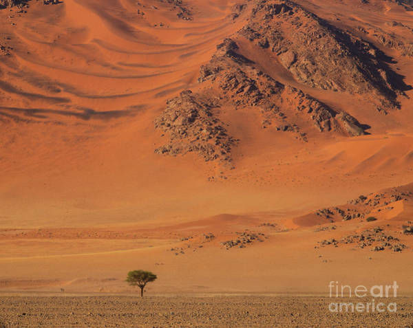 Wall Art - Photograph - Namibia Tree And Exposed Dunes by Mike Reid