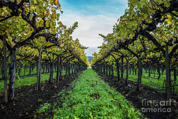 Wall Art - Photograph - Napa In Color by Jon Neidert