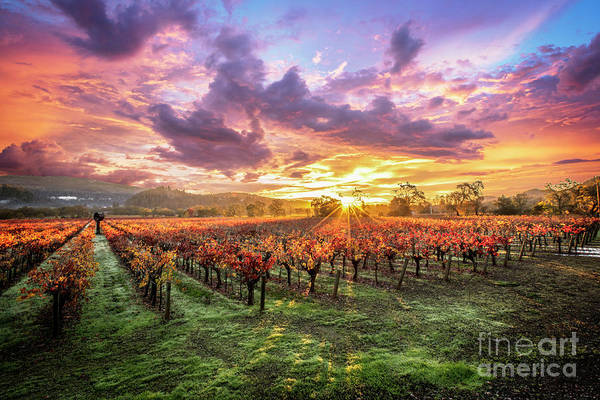 Wall Art - Photograph - Napa Sunrise by Jon Neidert