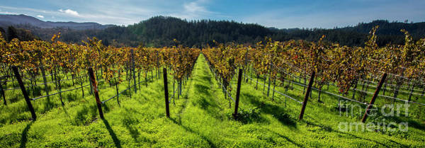 Wall Art - Photograph - Napa Valley Beauty by Jon Neidert