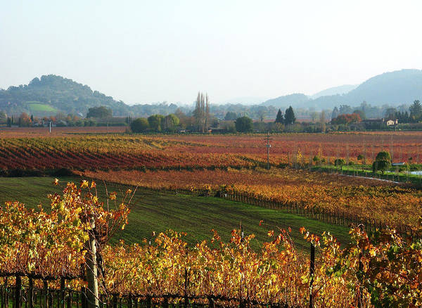 Napa Valley Photograph - Napa Valley In Autumn by Tjhunt