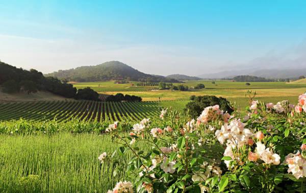 Napa Valley Photograph - Napa Valley Landscape In Spring by Creativeye99