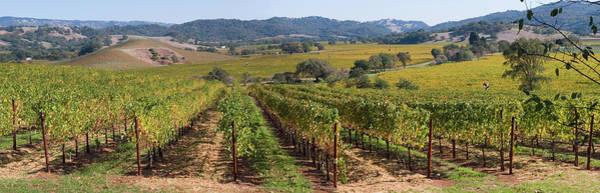 Napa Valley Photograph - Napa Valley Vineyard Panorama by Leezsnow