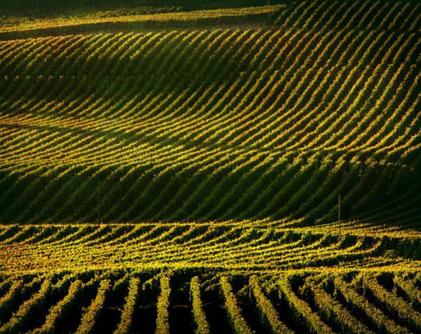 Napa Valley Photograph - Napa Valley Vineyard by Photographer Chris Archinet