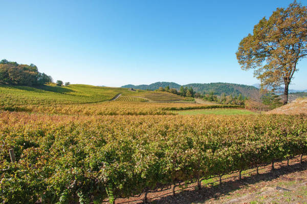 Photograph - Napa Valley Wine Country by Mark Duehmig