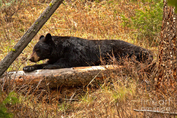 Photograph - Napping On My Favorite Log by Adam Jewell