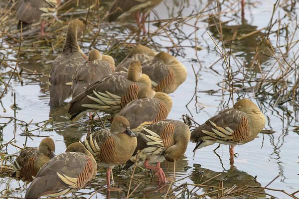 Atherton Tablelands Photograph - Naptime by Kim Wilder Hinson