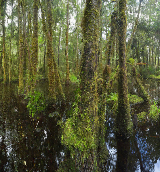 New Leaf Photograph - Native Bush And Wetland, New Zealand by Eastcott Momatiuk
