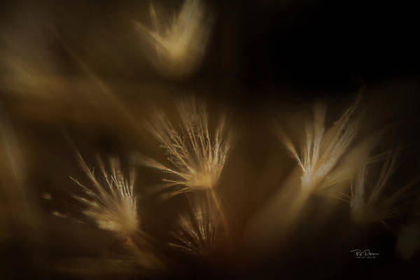 Photograph - Natural Abstract by Bill Posner