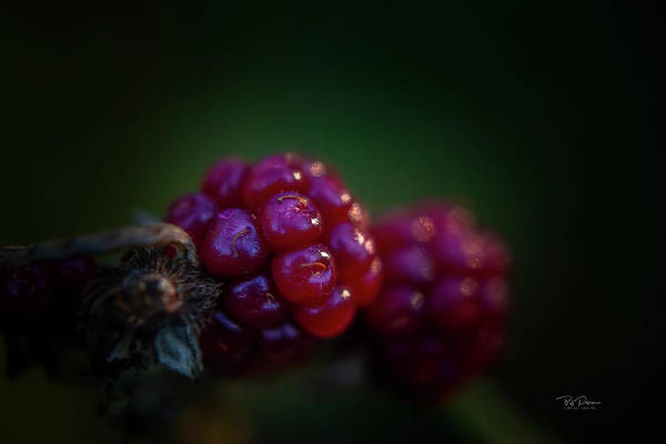 Photograph - Natural Breakfast by Bill Posner