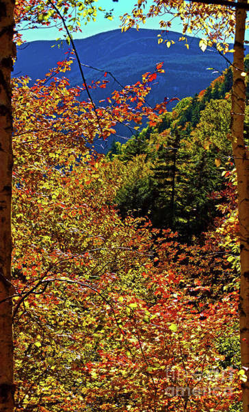 Photograph - Natural Frame by Patti Whitten