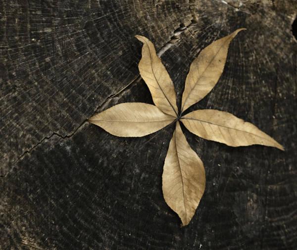 Wall Art - Photograph - Natural Gold 1 by Lori Deiter