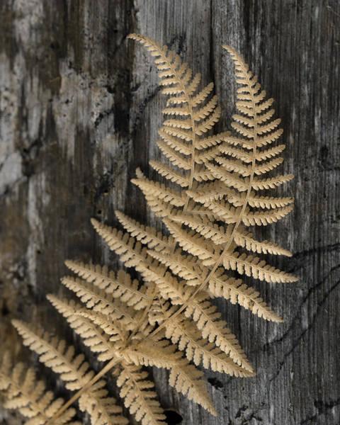 Wall Art - Photograph - Natural Gold 3 by Lori Deiter