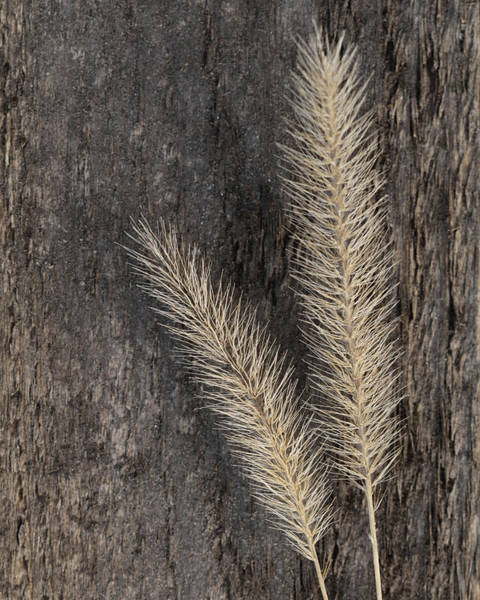 Wall Art - Photograph - Natural Gold 4 by Lori Deiter