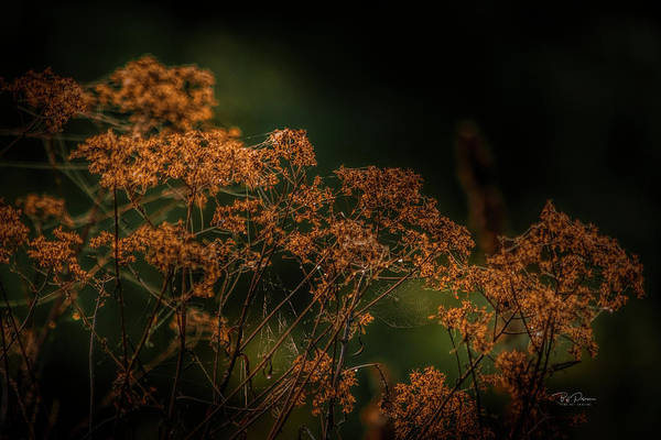 Photograph - Natural Halloween Colors by Bill Posner