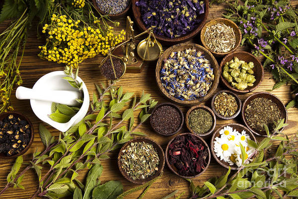 Wall Art - Photograph - Natural Medicine, Herbs by Sebastian Duda