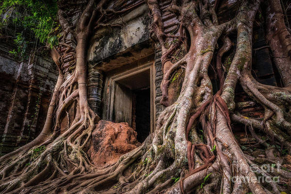 Wall Art - Photograph - Nature Always Wins by Dan Montalbano