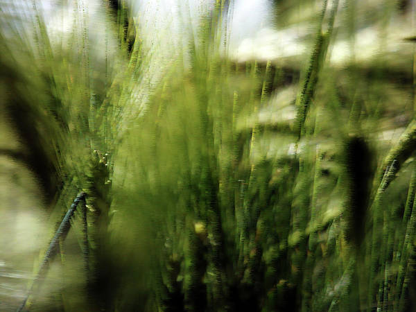 Photograph - Nature Art 10 by Jorg Becker
