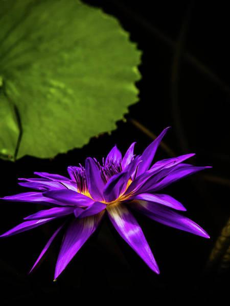 Photograph - Nature Art 27 by Jorg Becker