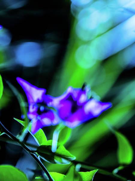 Photograph - Nature Art 34 by Jorg Becker