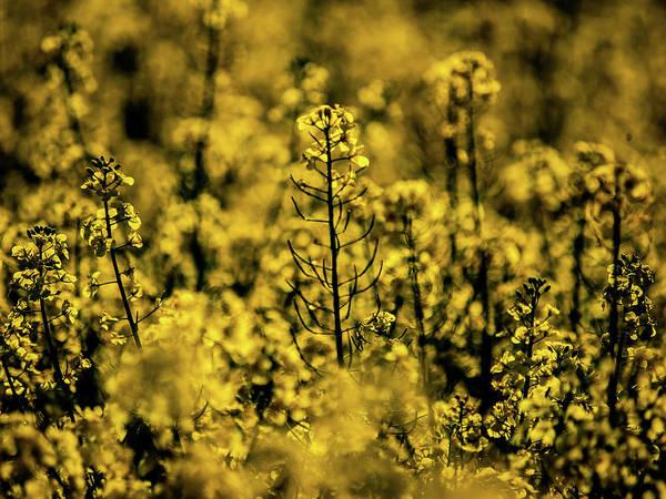 Photograph - Nature Art 5 by Jorg Becker