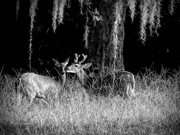 Photograph - Nature Lovers by Robert Stanhope
