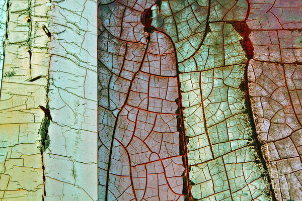 Photograph - Nature Or Nurture by Marilyn Cornwell