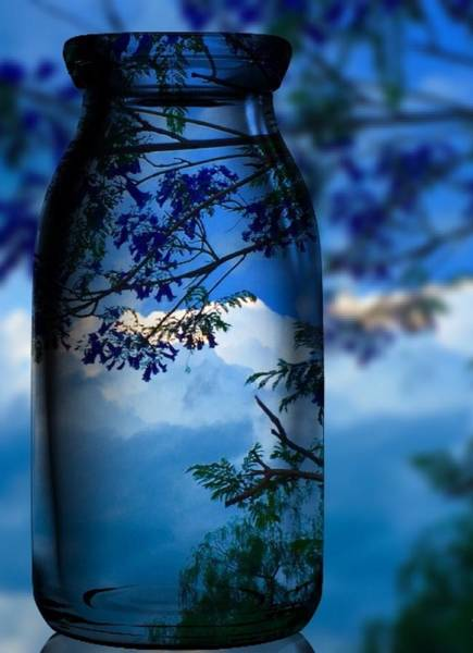 Photograph - Nature Through Bottle  by Colette V Hera Guggenheim