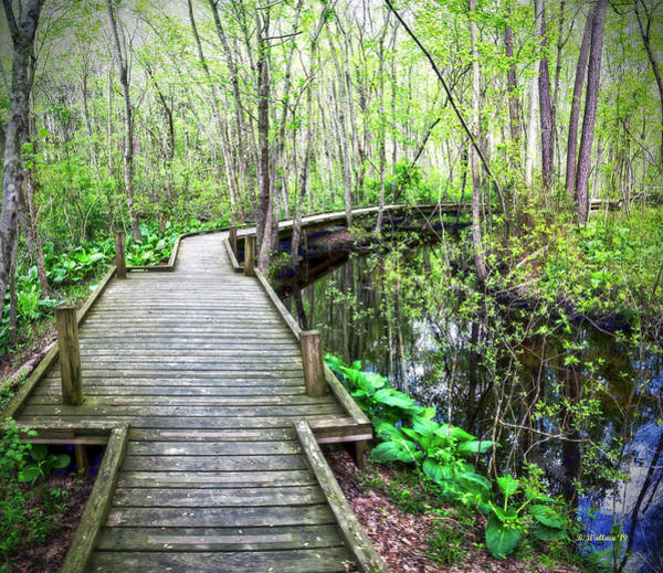 Wall Art - Photograph - Nature Trail Boardwalk by Brian Wallace