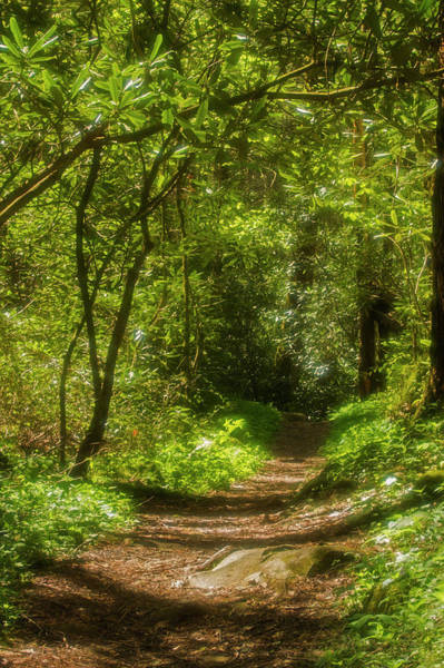 Southern Usa Photograph - Nature Trail In Spring by Jerry Whaley