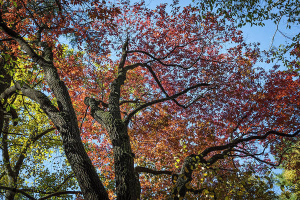 Photograph - Nature's Art In Autumn by Debra and Dave Vanderlaan