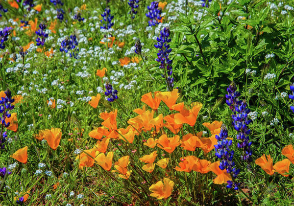 Photograph - Nature's Beautiful Bouquet by Lynn Bauer