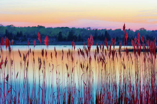 Photograph - Natures Colors by Stewart Helberg