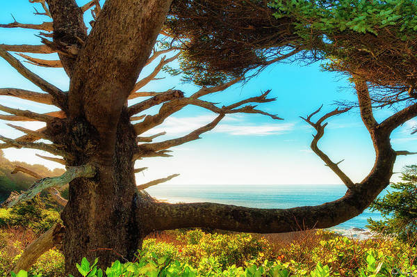 Photograph - Nature's Framing Of The Mighty Pacific Ocean by Dee Browning