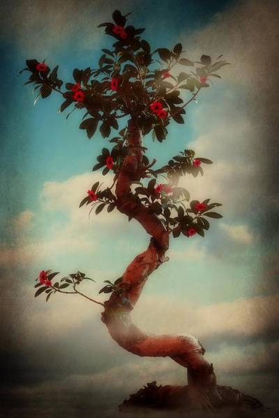 Bonsai Tree Digital Art - Natures Magic 2 by Christine Lake