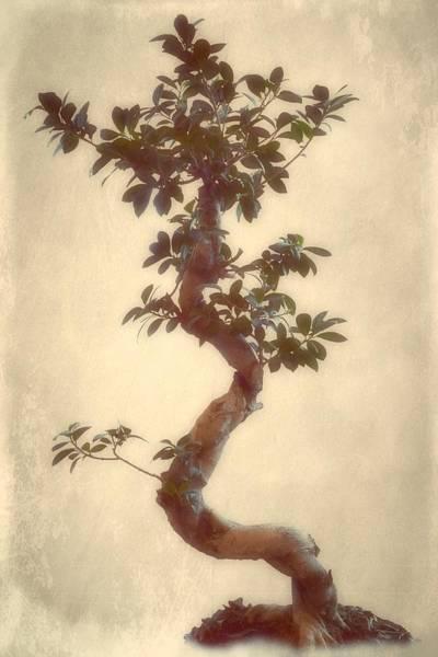Bonsai Tree Digital Art - Natures Magic by Christine Lake