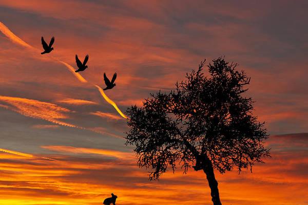 Digital Art - Natures Sunrise by Steve Purnell