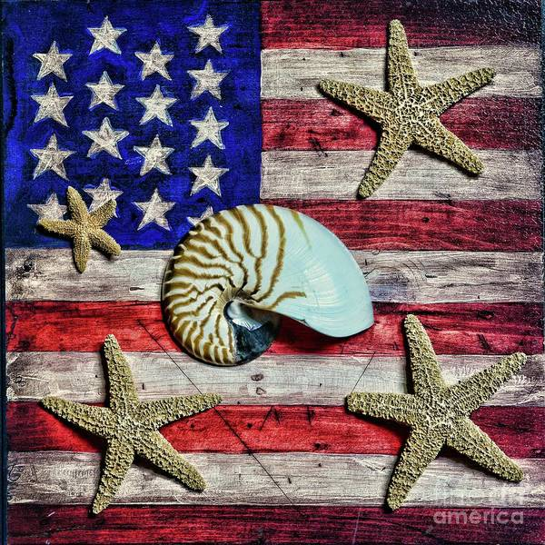 Wall Art - Photograph - Nautilus And Starfish On American Flag Square Format by Paul Ward
