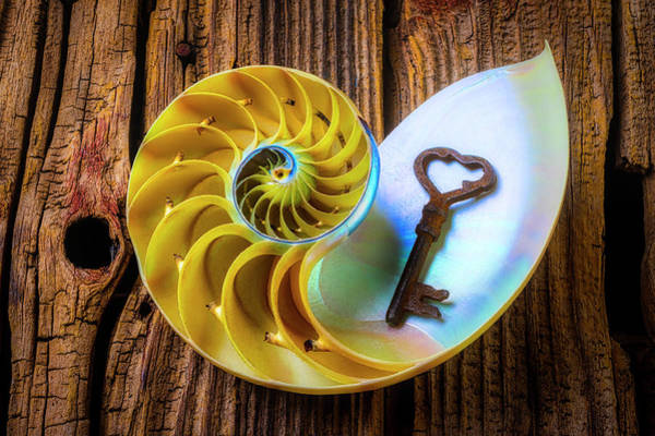 Wall Art - Photograph - Nautilus Shell And Old Key by Garry Gay