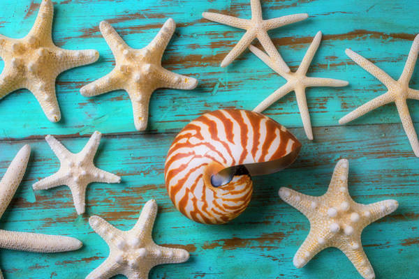 Wall Art - Photograph - Nautilus Shell And White Sea Stars by Garry Gay