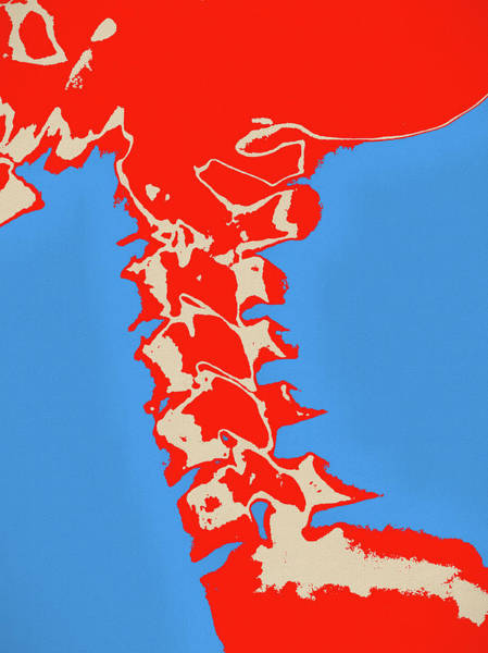 Painting - Neck Vertebrae Pop Art by Dan Sproul