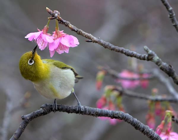 Okinawa Photograph - Nectar by Karen Walzer