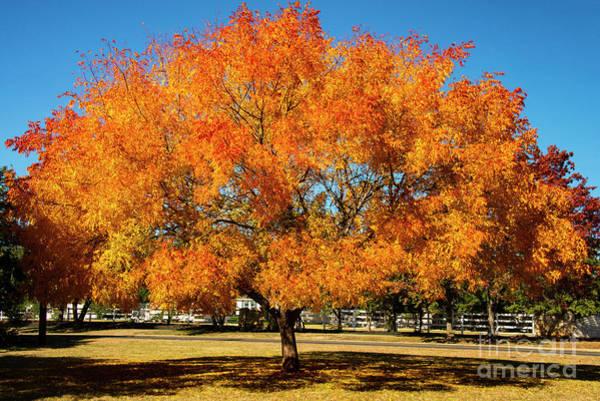 Photograph - Neighborhood Autumn Color One by Bob Phillips