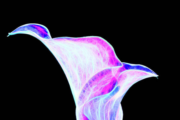 Digital Art - Neon Calla Lily by Scott Lyons