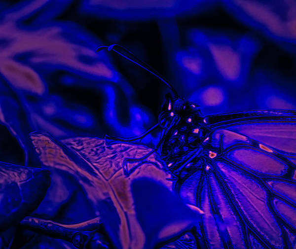Digital Art - Neon Monarch Macro by Keith Smith