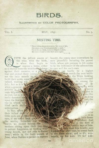 Empty Nest Wall Art - Photograph - Nesting Time by Alison Sherrow I AgedPage
