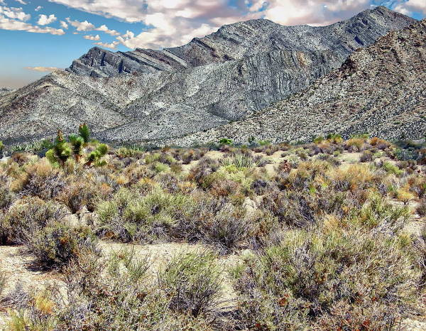 Photograph - Nevada Landscape by Anthony Dezenzio