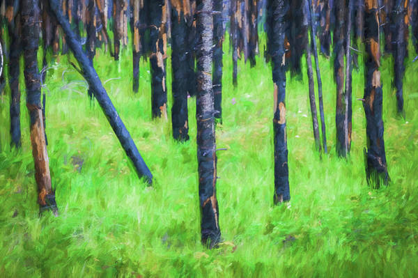 Wall Art - Photograph - New And Old Burnt Trees And New Grass Glacier National Park 102 by Rich Franco